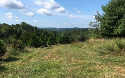 Carroll County – Newmantown RD, Dugspur Area – SOLD